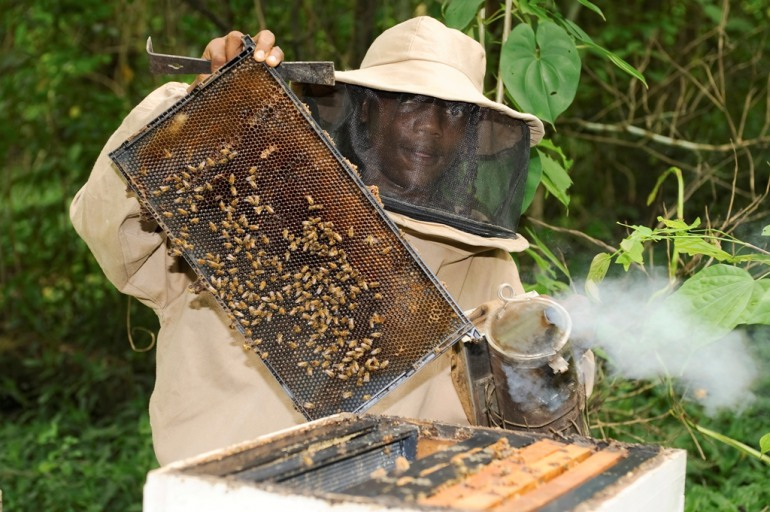 JAMAICAN BEES UNDER ATTACK: Bee keeping Units Clamps Down on the Spread of American Foulbrood Disease